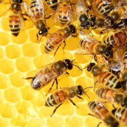 uzytecznosc pszczol